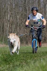 Yedoo-Mezeq-dog-scootering