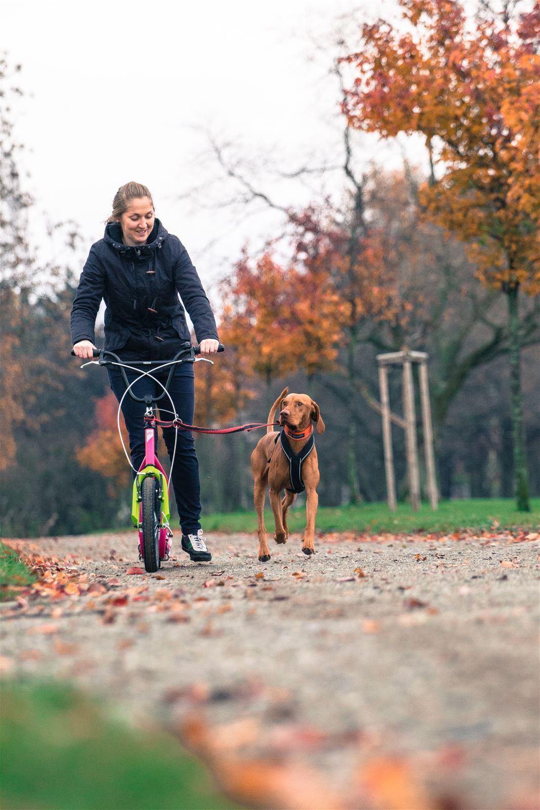 Dog Scootering - Mushing - Kick2Ride